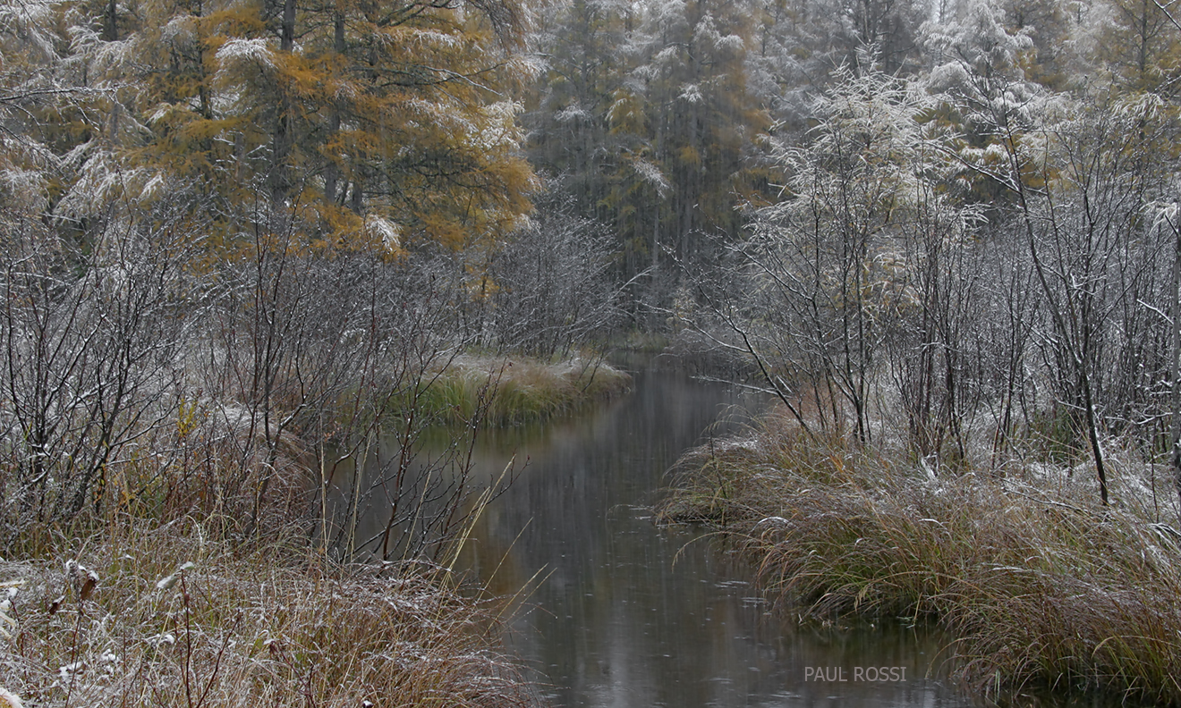 This image has an empty alt attribute; its file name is tamarack-creek-snow.jpg